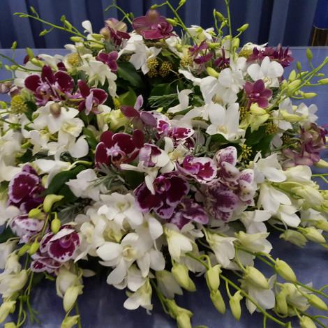 Žarni venček Dendrobium
