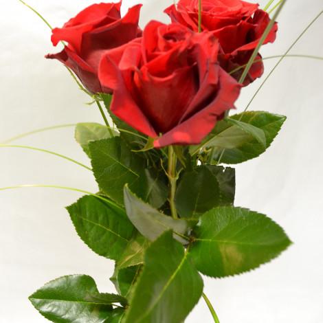 Šopek treh rdečih vrtnic