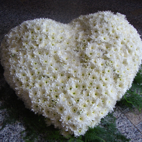 Polno belo srce